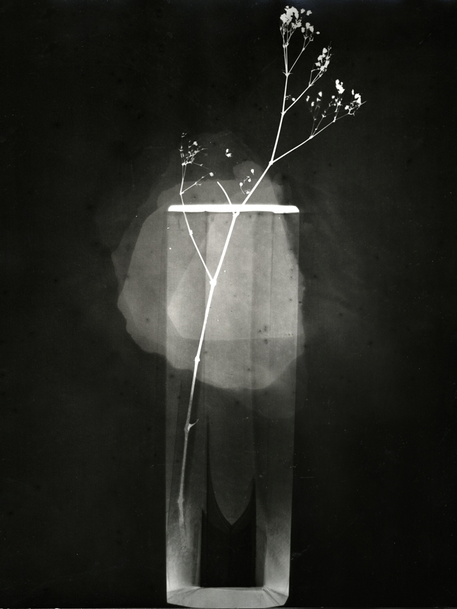 untitled, photogram, 2012