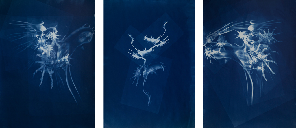 untitled, cyanotype, 3 x 70/100 cm, 2016
