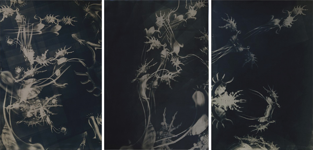 untitled, cyanotype, 3 x 70/100 cm